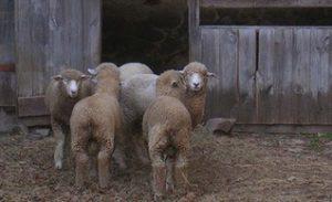 08-26-2020 Dudley Farm, Guilford